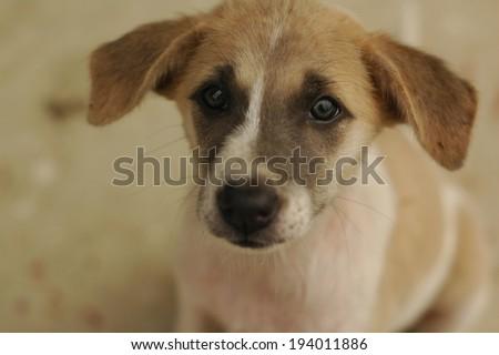 The dog #194011886