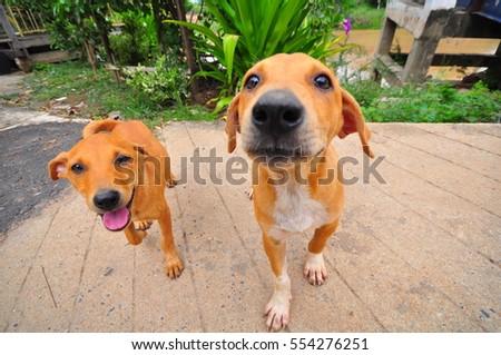 The dog #554276251