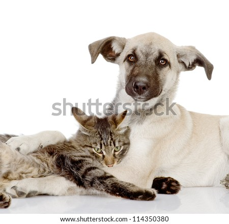 the dog and cat embrace. isolated on white background