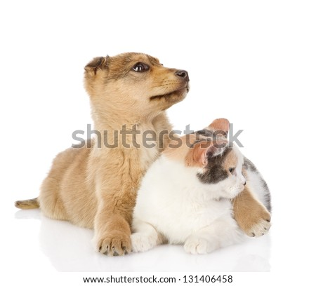 the dog and cat have a rest together. isolated on white background