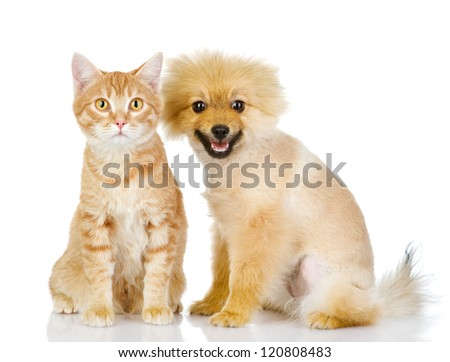 the dog and cat  look in the camera. isolated on white background