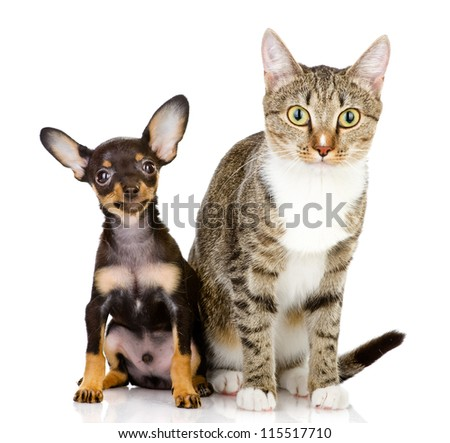 the dog and cat watchfully look in the camera. isolated on white background