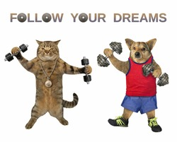 The dog and the cat athletes are lifting the dumbbells together. Follow your dreams. White background. Isolated.