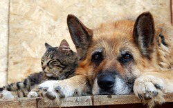 The dog and the cat lie on the doorstep.