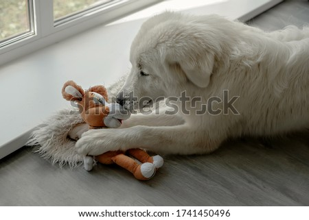 The dog breaks and tears the soft toy. Naughty dog. Puppy games. Friendship is over. The friendship didn't go well. Human dog friend. dog training. Betrayal of a friend. Friends fight