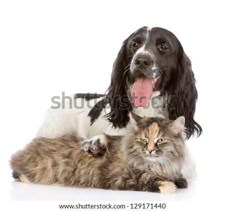 the dog embraces a cat.  looking at camera. isolated on white background
