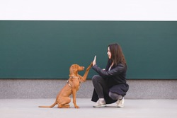 The dog gives five girls. A trained puppy performs teams. The owner and cute dog are playing against the background of a colored wall