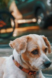 The dog glanced with suspicion against a bokeh background.