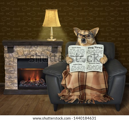The dog in glasses is reading a newspaper in the black leather armchair with a blanket over his legs near fireplace in the living room. #1440184631
