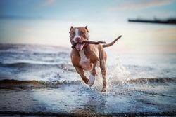 the dog in the water, swim, splash