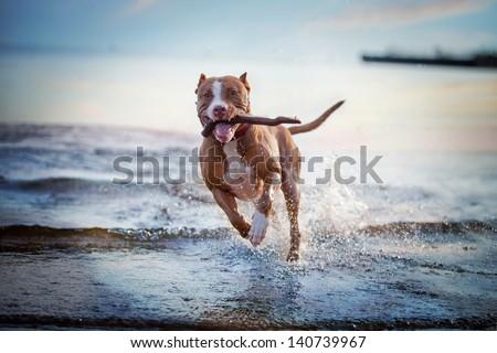 the dog in the water, swim, splash #140739967