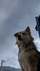 The dog is a domesticated carnivore of the family Canidae. It is part of the wolf-like canids, and is the most widely abundant terrestrial carnivore.