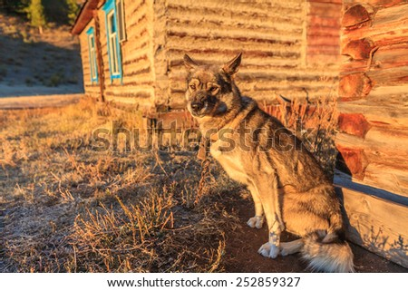 The dog is guarding the house in the village