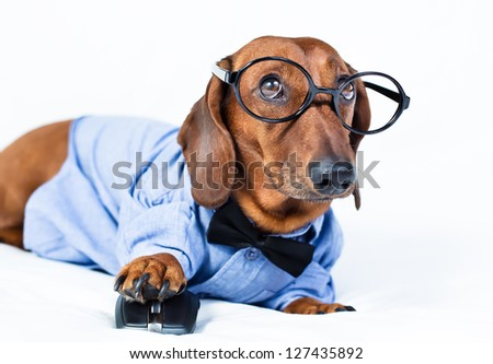 The dog is in the shirt and glasses with computer mouse