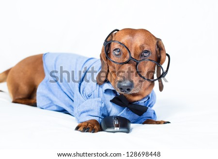 The dog is in the shirt and glasses with mouse
