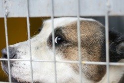 the dog is looking at the person from behind the bars. Close-up portrait of a dog
