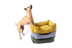The dog jumps happily, leaning its front paws on three colored piles of piles for sleeping animals. White background. Isolate.