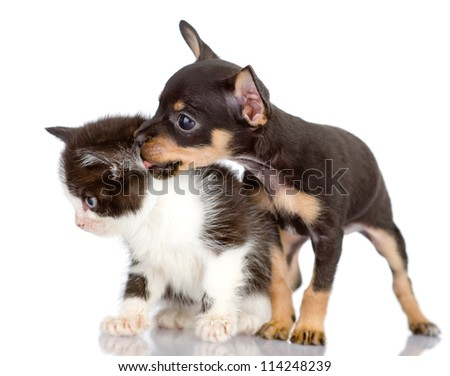 the dog kisses a kitten. Isolated on a white background