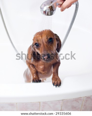 The dog likes a shower in the bath