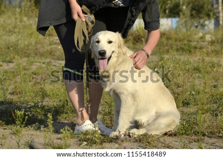 The dog performs the commands of the owner. Labrador retriever. Obedient puppy. Puppies education, cynology, intensive training of young dogs. Young energetic dog on a walk. Enjoying, play with toys. #1155418489