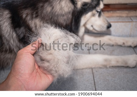 The dog's hair is on hand. Dogs that are in poor health cause a lot of hair loss. The dog's fur is shed because it's time to shed. Dog hair loss