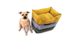 The dog sits near three differently colored animal sleeping beds. On white background. Isolate. Angle view.