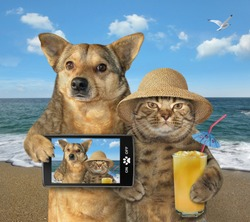 The dog with a smartphone and cat in a straw hat with a glass of juice are on the beach in the summer. They made the selfie for memory.