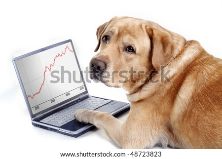 The dog work on computer