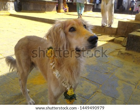 the doggy in the pic is found in a temple in india, devotees visiting the temple also worship the dog