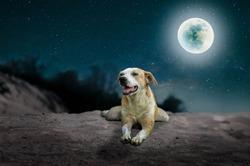 The dogs slept on the desert on the full moon in full swing.