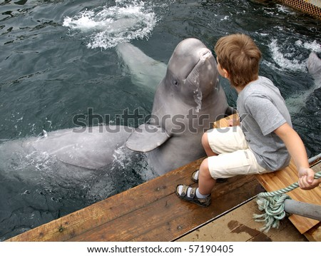 The dolphin beluga jumps out of water and kisses the boy - stock photo