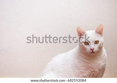 The domestic cat is a small, typically furry, carnivorous mammal. They are often called house cats when kept as indoor pets or simply cats when there is no need to distinguish them from other felines.
