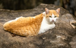 The domestic cat peering through cave in mountain