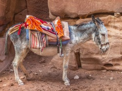 The donkey with a red saddle against the background of the rock rests in the shade and waits for the next passengers.