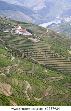 The douro vineyards, Port wine farm with the UNESCO world heritage slopes.Porto, Portugal