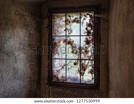 the dream remained outside the window #1277530999