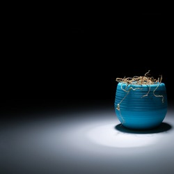 The dried herb in a pot in the dark glows white light. A withered flower on a black background is illuminated by light. The indoor flower is dry. Close-up. The indoor flower is dry in a blue pot.