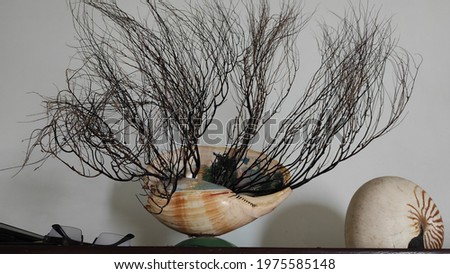 the dried root of the bahar and used as a room decoration Stok fotoğraf ©