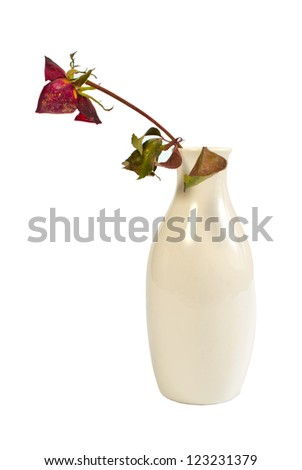 the dried-up rose in a ceramic vase, isolated on the white