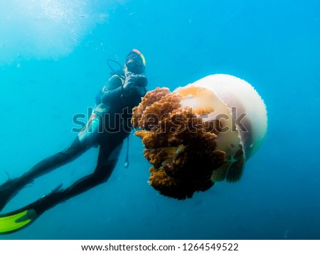 The driver taking pictures of big jellyfish in the Indian ocean