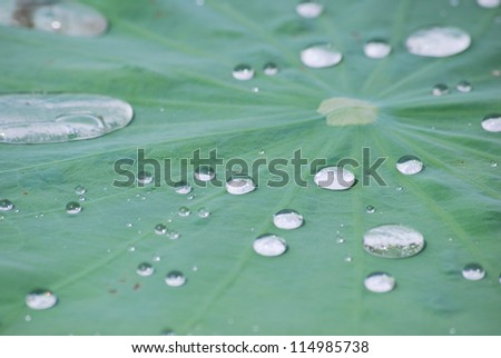 The drop water on leaf