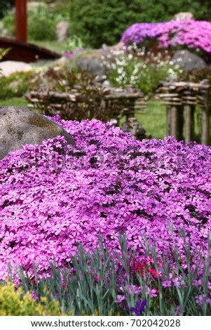 The drought-resistant phlox well grows at tops of garden hills. At plentiful flowering forms motley carpets of bright tones./Phlox subulata in a garden.