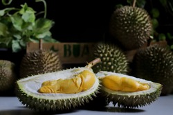 The Durian fruit cut open to reveal fleshy inside. Durian is known as the king of fruit in Asia which has a sweet and delicious taste