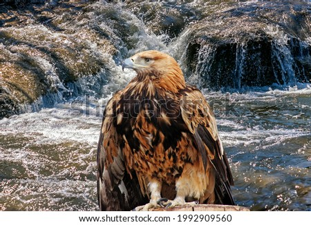 The eagle and mountain river.