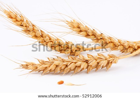 The ears of wheat, wheat