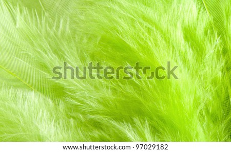 The Easter background - soft fluffy green feathers