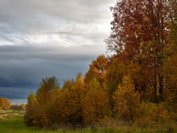 The edge of the autumn forest with yellowed leaves and the blue sky with heavy gloomy clouds portend the onset of rain.