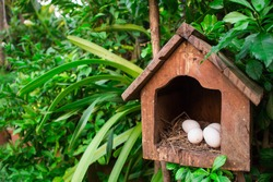 The eggs in the bird house in on the tree.