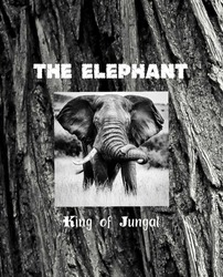 The Elephant image in black and white