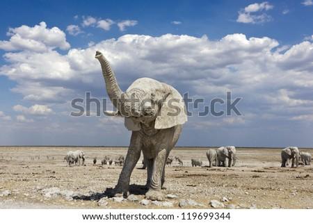 the elephant raises his trunk - stock photo